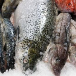 Køb frisk fisk til levering