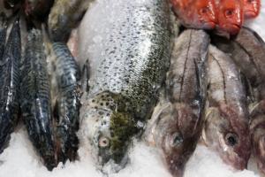 Levering af frisk fisk til døren